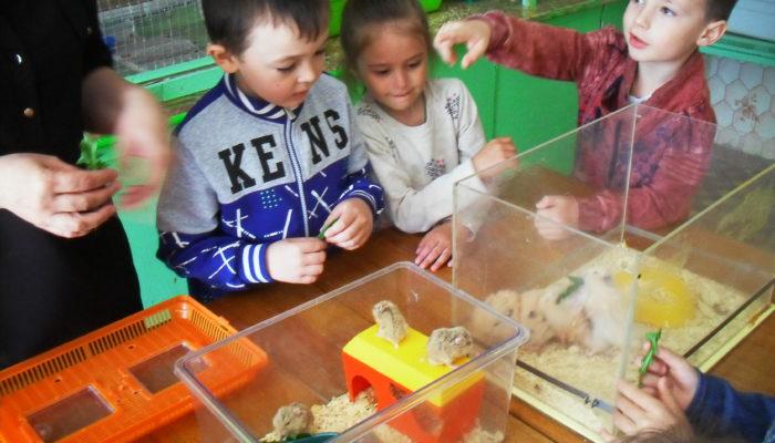 Удивительные факты о животных для детей
